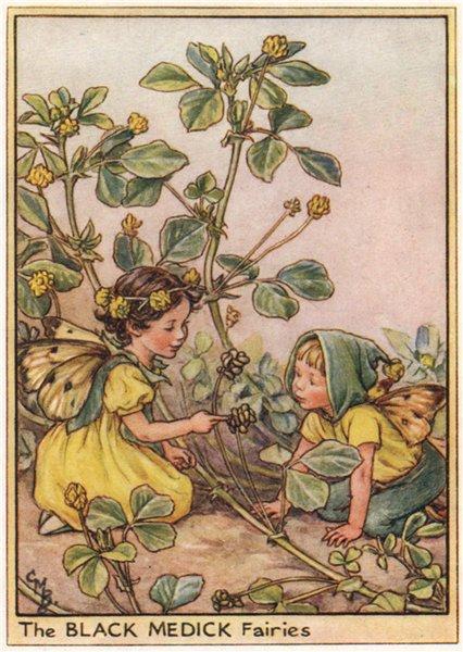 Associate Product Black Medick Fairies by Cicely Mary Barker. Wayside Flower Fairies c1948 print