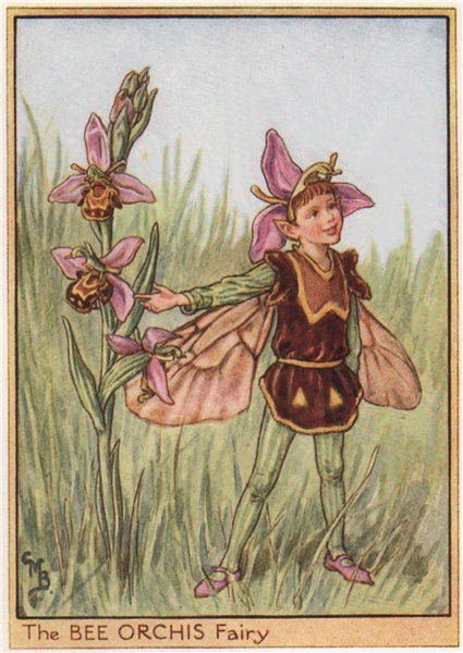 Associate Product Bee Orchis Fairy by Cicely Mary Barker. Wayside Flower Fairies c1948 old print