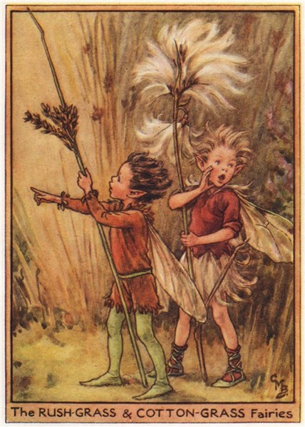 Associate Product Rush & Cotton-Grass Fairies by Cicely Mary Barker. Wayside Flower Fairies c1948