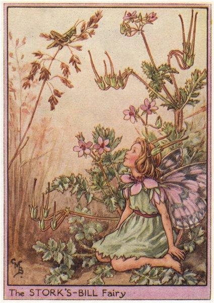 Associate Product Stork's bill Fairy by Cicely Mary Barker. Wayside Flower Fairies c1948 print