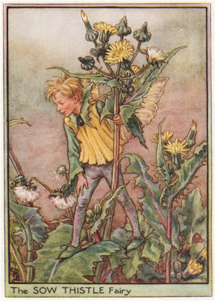 Associate Product Sow Thistle Fairy by Cicely Mary Barker. Wayside Flower Fairies c1948 print