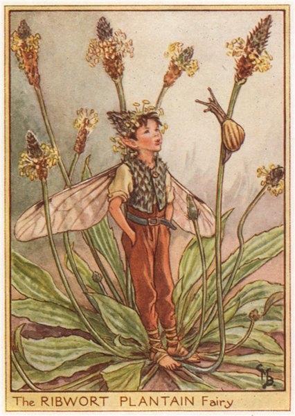 Associate Product Ribwort Plantain Fairy by Cicely Mary Barker. Wayside Flower Fairies c1948