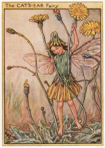 Associate Product Cat's-Ear Fairy by Cicely Mary Barker. Wayside Flower Fairies c1948 old print