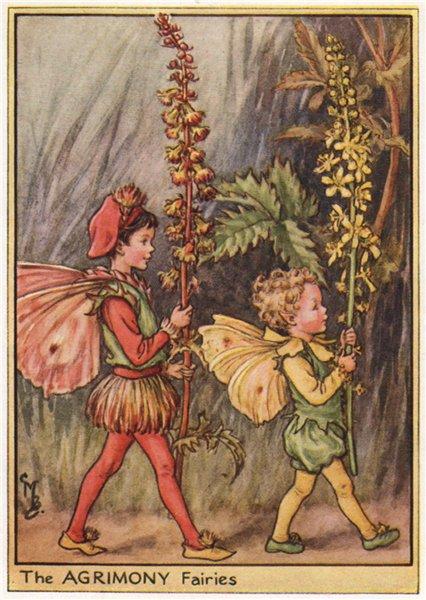 Associate Product Agrimony Fairy by Cicely Mary Barker. Wayside Flower Fairies c1948 old print