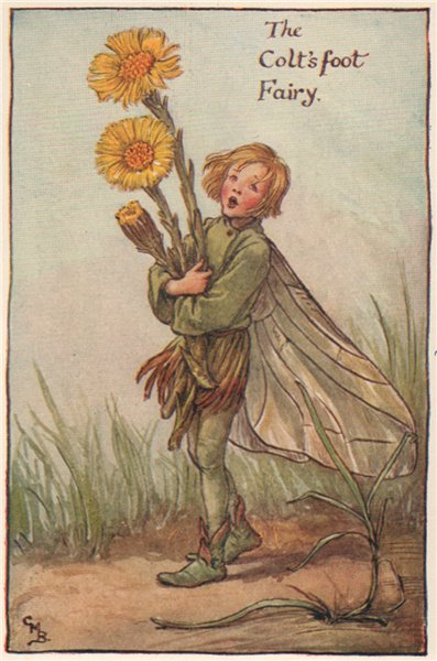 Associate Product Colt's foot Fairy by Cicely Mary Barker. Spring Flower Fairies c1935 old print