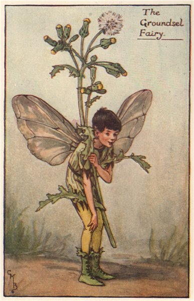 Associate Product Groundsel Fairy by Cicely Mary Barker. Spring Flower Fairies c1935 old print