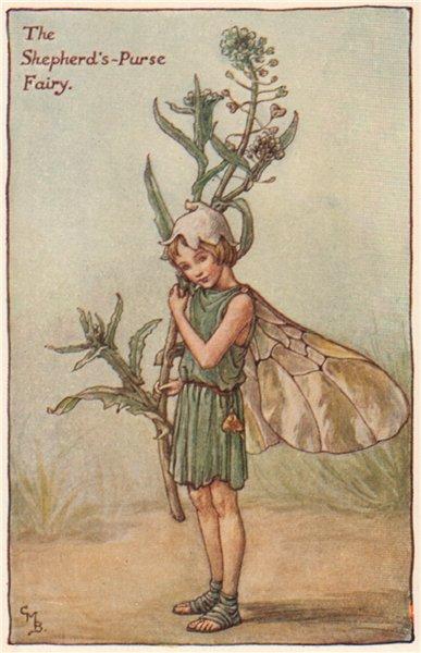 Associate Product Shepherd's-Purse Fairy by Cicely Mary Barker. Spring Flower Fairies c1935