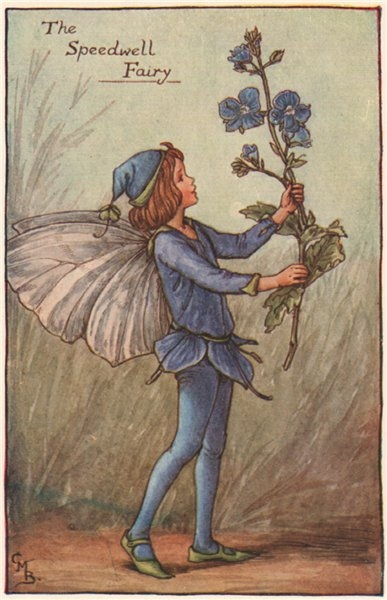 Associate Product Speedwell Fairy by Cicely Mary Barker. Spring Flower Fairies c1935 old print