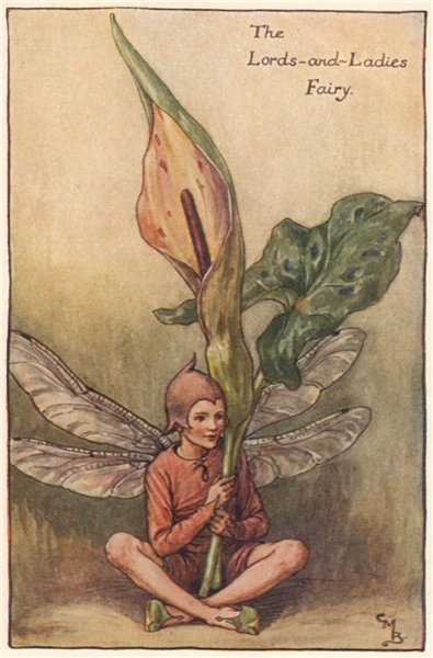 Associate Product Lords-and-Ladies Fairy by Cicely Mary Barker. Spring Flower Fairies c1935
