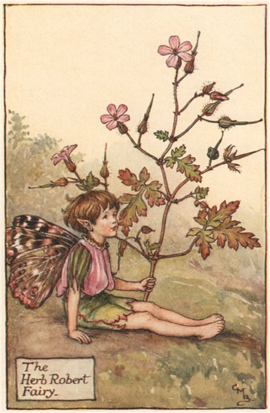 Associate Product Herb Robert Fairy by Cicely Mary Barker. Summer Flower Fairies c1935 old print