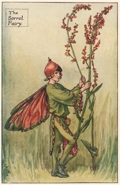 Associate Product Sorrel Fairy by Cicely Mary Barker. Summer Flower Fairies c1935 old print