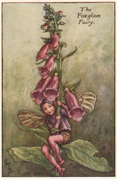Associate Product Foxglove Fairy by Cicely Mary Barker. Summer Flower Fairies c1935 old print