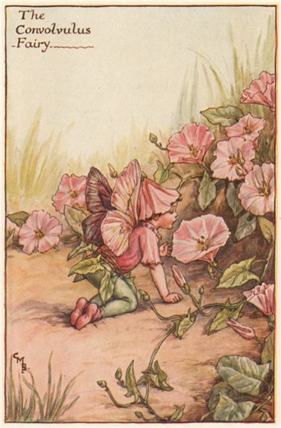 Associate Product Convolvulus Fairy by Cicely Mary Barker. Summer Flower Fairies c1935 old print