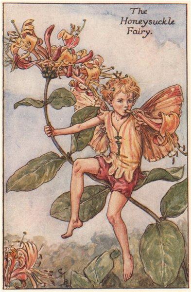 Associate Product Honeysuckle Fairy by Cicely Mary Barker. Summer Flower Fairies c1935 old print