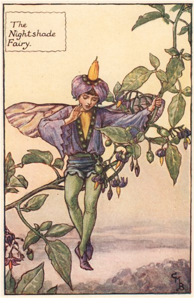Associate Product Night Shade Fairy by Cicely Mary Barker. Summer Flower Fairies c1935 old print