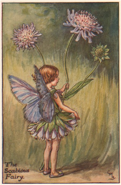 Associate Product Scabious Fairy by Cicely Mary Barker. Summer Flower Fairies c1935 old print