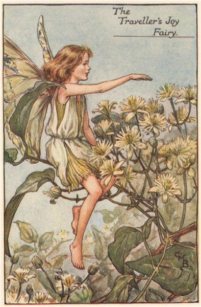 Associate Product Traveller's Joy Fairy by Cicely Mary Barker. Summer Flower Fairies c1935 print