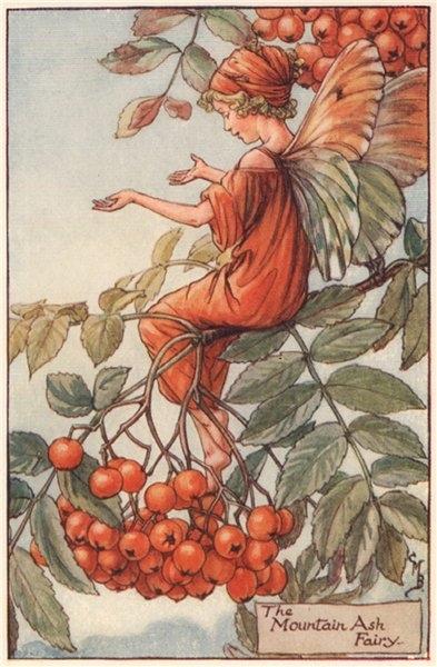 Associate Product Mountain Ash Fairy by Cicely Mary Barker. Autumn Flower Fairies c1935 print