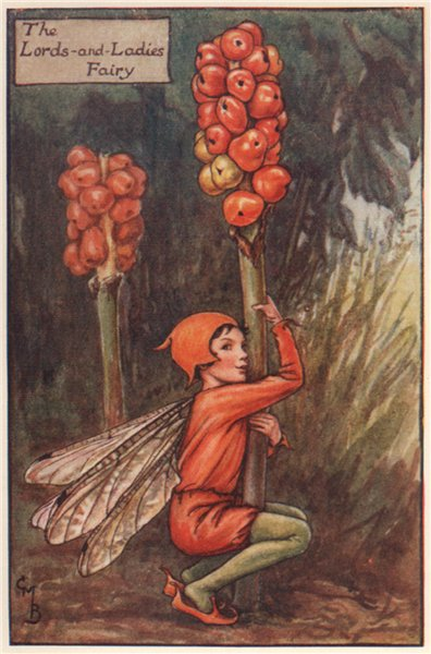 Associate Product Lord's-and-ladies Fairy by Cicely Mary Barker. Autumn Flower Fairies c1935