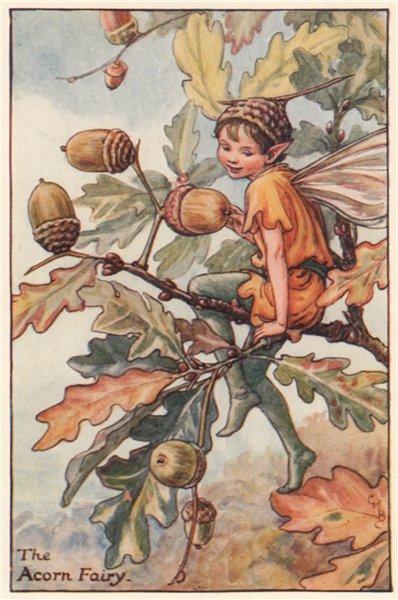 Associate Product Acorn Fairy by Cicely Mary Barker. Autumn Flower Fairies c1935 old print
