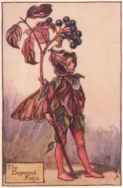 Associate Product Dogwood Fairy by Cicely Mary Barker. Autumn Flower Fairies c1935 old print