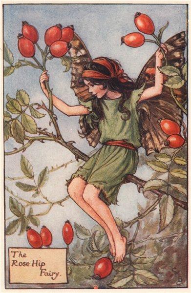 Associate Product Rose Hip Fairy by Cicely Mary Barker. Autumn Flower Fairies c1935 old print