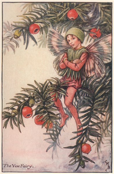 Associate Product Yew Fairy by Cicely Mary Barker. Autumn Flower Fairies c1935 old vintage print