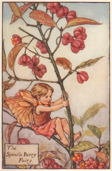 Associate Product Spindel Berry Fairy by Cicely Mary Barker. Autumn Flower Fairies c1935 print