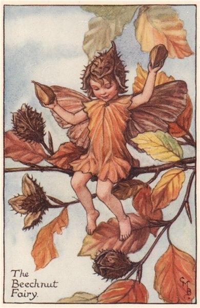 Associate Product Beech nut Fairy by Cicely Mary Barker. Autumn Flower Fairies c1935 old print