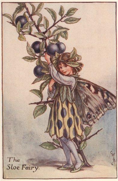 Associate Product Sloe Fairy by Cicely Mary Barker. Autumn Flower Fairies c1935 old print