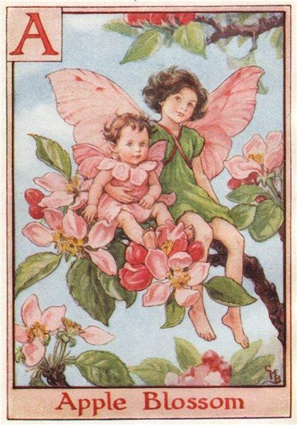 Associate Product A = Apple Blossom Fairy by Cicely Mary Barker. Alphabet Flower Fairies c1934