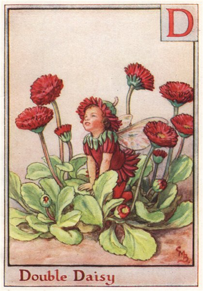 Associate Product D = Double Daisy Fairy by Cicely Mary Barker. Alphabet Flower Fairies c1934