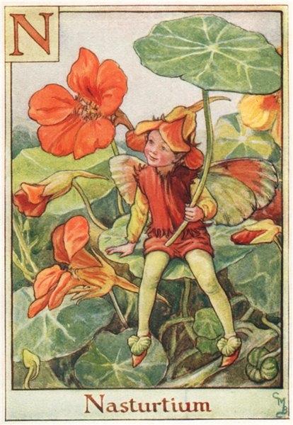 Associate Product N = Nasturtium Fairy by Cicely Mary Barker. Alphabet Flower Fairies c1934