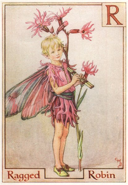 Associate Product R = Ragged Robin Fairy by Cicely Mary Barker. Alphabet Flower Fairies c1934