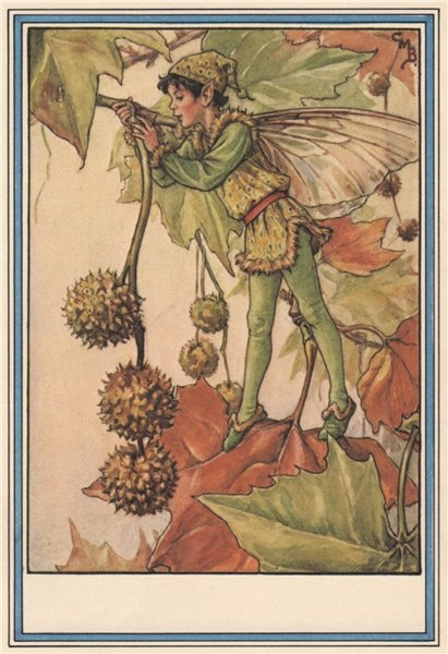 Associate Product Plane Tree Fairy by Cicely Mary Barker. Winter Flower Fairies 1985 old print