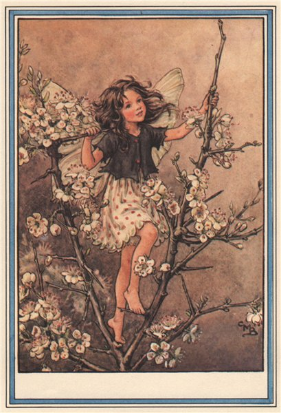Associate Product Blackthorn Fairy by Cicely Mary Barker. Winter Flower Fairies 1985 old print