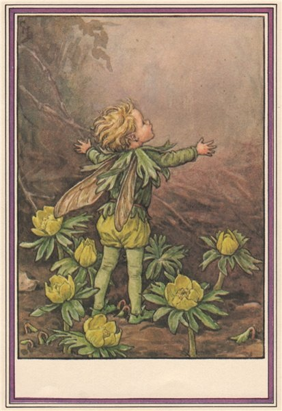 Associate Product Winter Aconite Fairy by Cicely Mary Barker. Winter Flower Fairies 1985 print