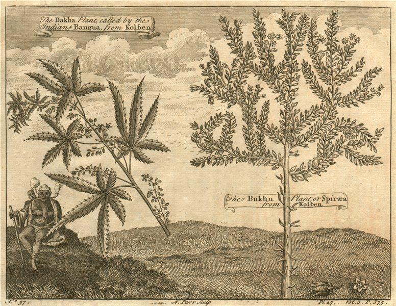 AFRICA. The Dakha Plant or Bangua. The Bukhu plant or Spiraea. After KOLBEN 1746