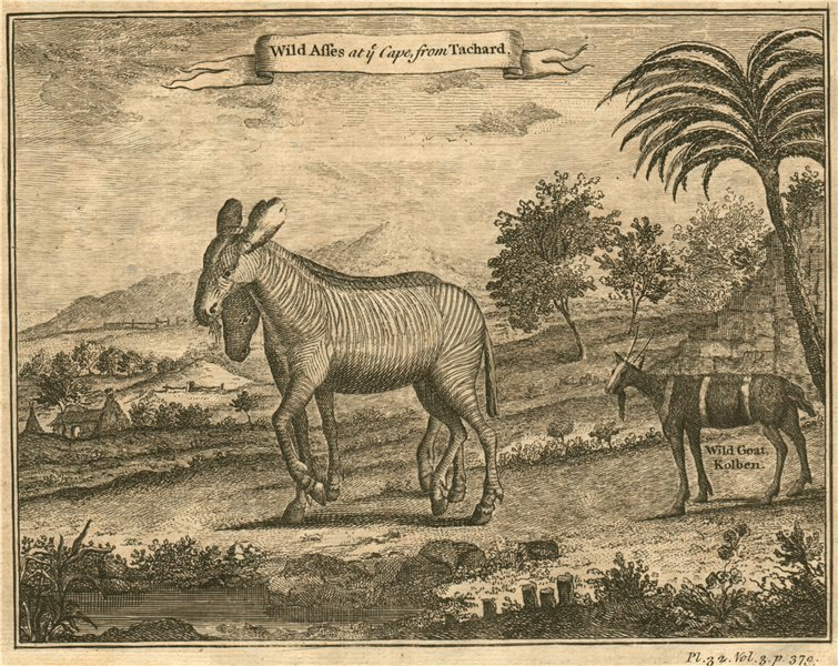 Associate Product SOUTH AFRICA. 'Wild Asses at the Cape'. Zebras. Wild Goat. After TACHARD 1746