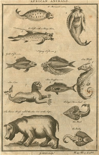 AFRICAN ANIMALS Mermaid Sea lion River horse (Hippo) Fish with sharp horn 1746