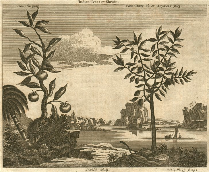 Associate Product CHINA. 'Indian Trees or Shrubs; The Su ping; The Chew ku or Goyavas' 1746
