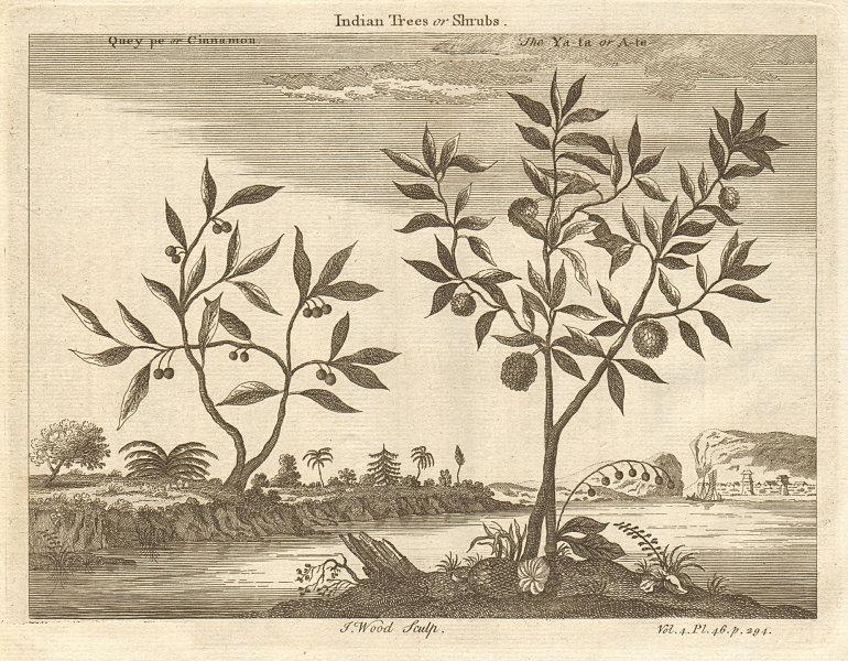 Associate Product CHINA. 'Indian Trees or Shrubs; Quey pe or Cinnamon; The Ya ta or A te' 1746