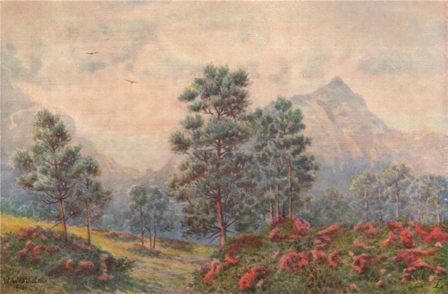 Associate Product Silver Trees & Wild Geraniums, Cape Town, by William Westhofen 1910 old print