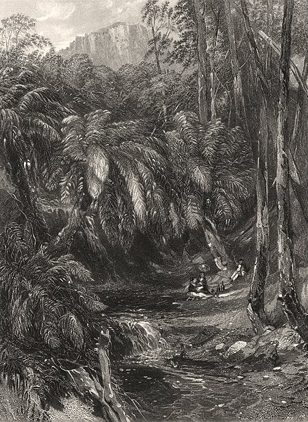 """Associate Product """"A Fern Tree Valley"""" by Edwin Carton BOOTH / John Skinner PROUT. Australia c1874"""