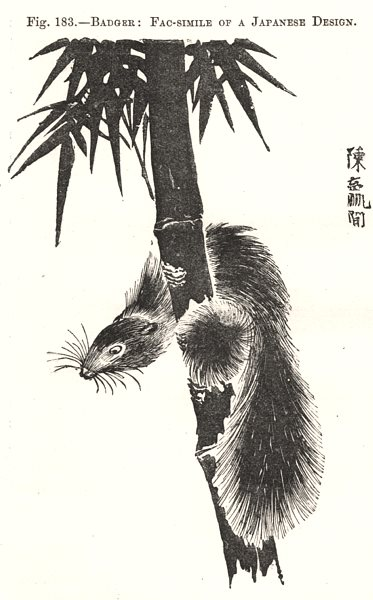 Associate Product Badger: Fac-simile of a Japanese Design 1885 old antique vintage print picture