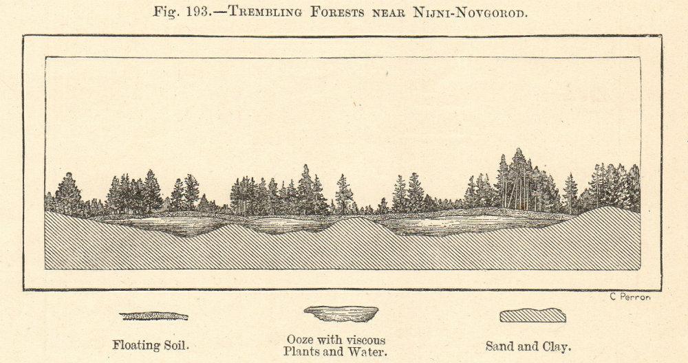 Associate Product Trembling Forests near Nizhny-Novgorod. Kerzhenets. Russia. Section 1885 print