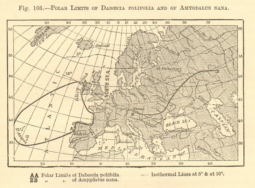 Associate Product Polar limits of Daboecia Polifolia & of Amygdalus Nana. Europe. Sketch map 1886