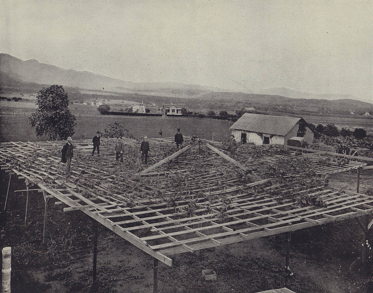 A Santa Barbara winery, California. STODDARD 1895 old antique print picture