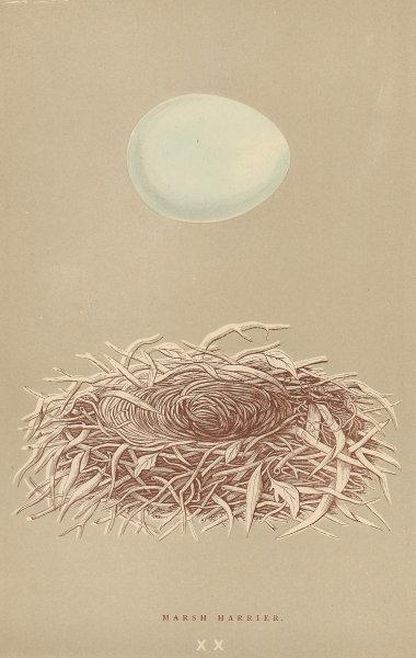 BRITISH BIRD EGGS. Marsh Harrier. MORRIS 1896 old antique print picture