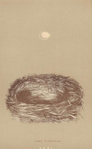 BRITISH BIRD EGGS & NESTS. Cole Titmouse. MORRIS 1896 old antique print